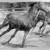 Horses, 2009 (36x48)_H3H0836 thumbnail