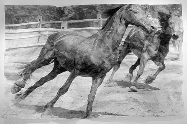 Horses, 2009 (36x48)_H3H0836