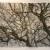 Darien Tree Conservancy Print 02.26.13 _Q7Q0001 thumbnail