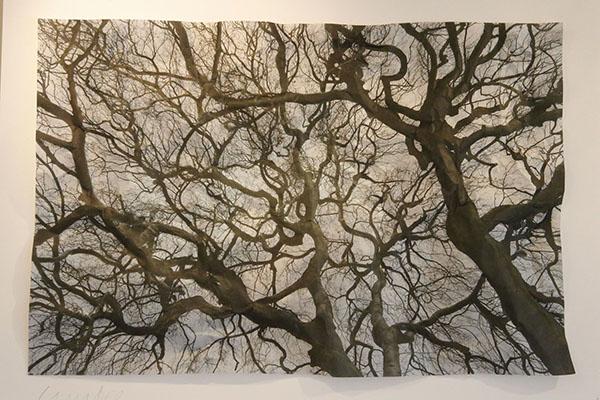 Darien Tree Conservancy Print 02.26.13 _Q7Q0001